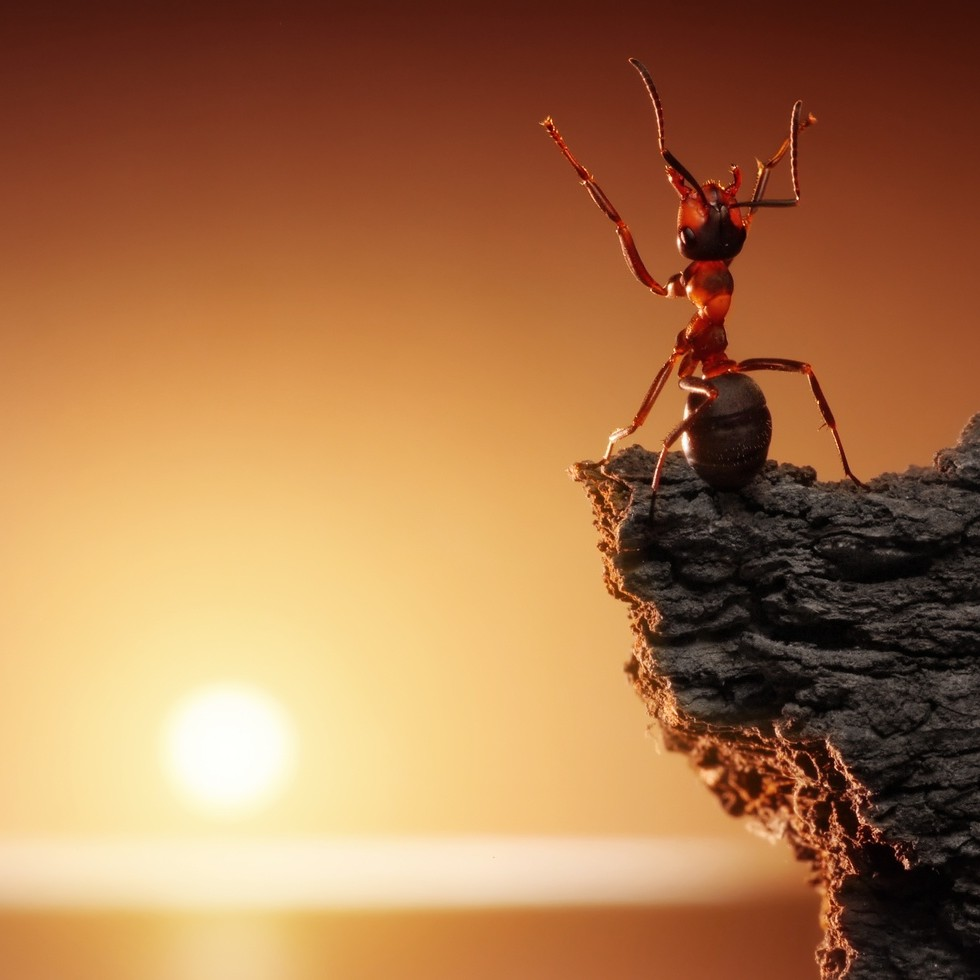 Ant looking at the sun 980x980 jpg 20 aug 2014 22 58 112k