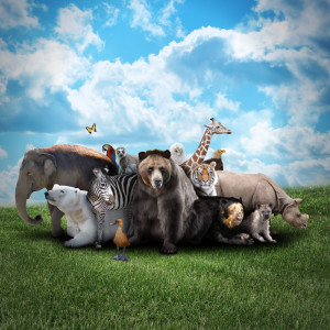 Group of Animals Created By God